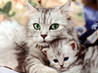 A collection of 14 close up HD pictures of Kittens and Cats with a meow cat sounds in back ground 4.2 MB